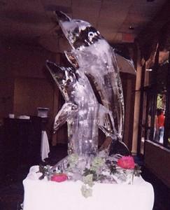 icedolphins_1_20141019_1615743637
